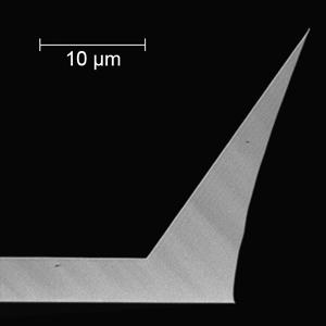 Tip Enhanced Raman Spectroscopy